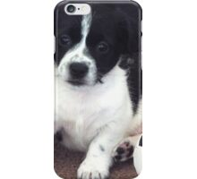 Daisy...The Poser iPhone Case/Skin