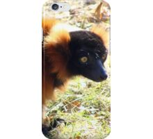 Red lemur iPhone Case/Skin