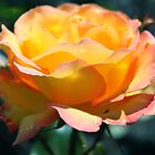 Gorgeous yellow rose flower holiday style. Floral photo art. by naturematters