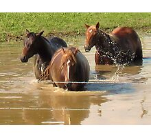 "Horses with Attitude no. 5 ""Hey...Youse Guys, I'm Still Talkin'"" Photographic Print"