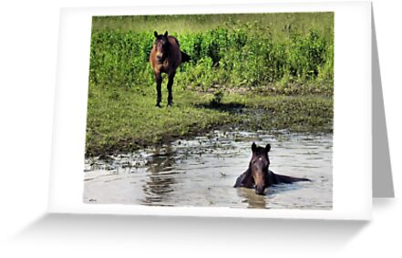 """""""LOOKING AT ME, LOOKING AT YOU""""... prints and products by © Bob Hall"""