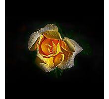 Brilliant Yellow Photographic Print