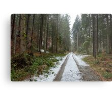 Road through the forest Metal Print