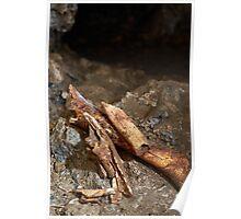 Cave bear fossils closeup Poster