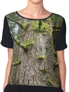 Pine tree with mossy branches Chiffon Top