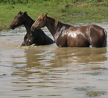 """Horses with Attitude no. 6  """"Double Dare Ya, Bet You Can't Do This!"""" by © Bob Hall"""