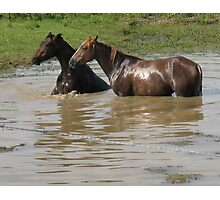"Horses with Attitude no. 6  ""Double Dare Ya, Bet You Can't Do This!"" Photographic Print"