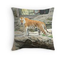 Looking Your Way Throw Pillow