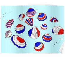 Tricolor Seashells Poster