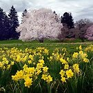 Colors of Spring by cclaude