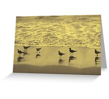 seagulls in the mist Greeting Card