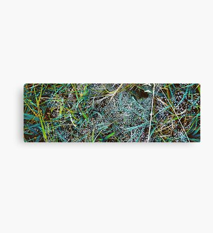 Sago No. 11 Canvas Print