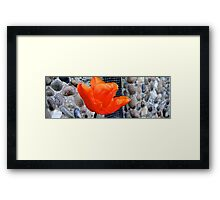 Sago No. 8 Framed Print