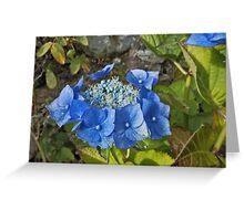 Blue hydrangea - halo Greeting Card