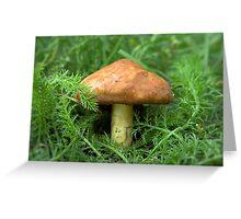 Mushroom in the grass Greeting Card