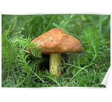 Mushroom in the grass Poster