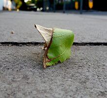 Leaf Study(1) by Vanessa  Warren