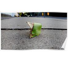 Leaf Study(1) Poster