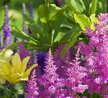 Astilbe In The Garden by Sandra Foster