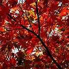 Shades Of Autumn by RedHillDigital