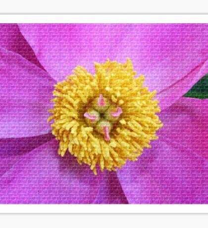 Pink and Yellow Peony Sticker