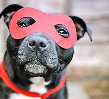 Super Hero Staffy by Michelle McMahon