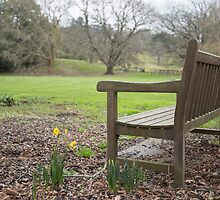 Waiting for Spring by WendyJC