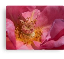 Inside The Rose Canvas Print