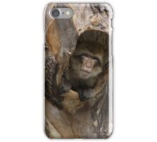 Barbary Macaque iPhone Case/Skin