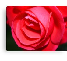 Last Rose Canvas Print