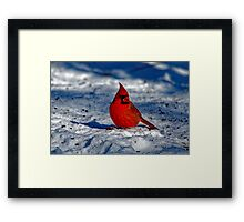 Male Northern Cardinal in the Snow Framed Print