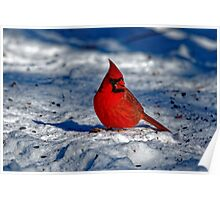 Male Northern Cardinal in the Snow Poster