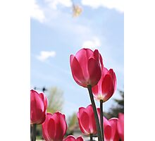 Vivid pink 01 Photographic Print