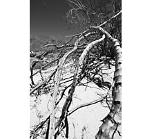Dead Branches Photographic Print