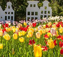 Spring time is Tulip Time by DPalmer