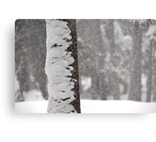 Snow-Flocked Jeffrey Pine Tree Metal Print