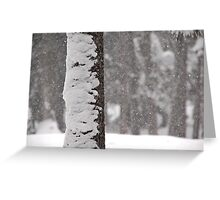 Snow-Flocked Jeffrey Pine Tree Greeting Card