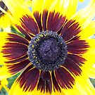 yellow sunflower by geot