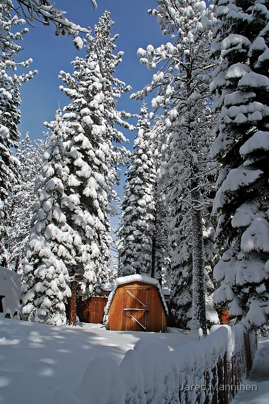 Snow-Flocked Trees and Shed by Jared Manninen