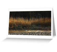 Gold on the riverbank Greeting Card