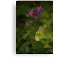 Pink Campion in Prehen Woods, Derry Canvas Print