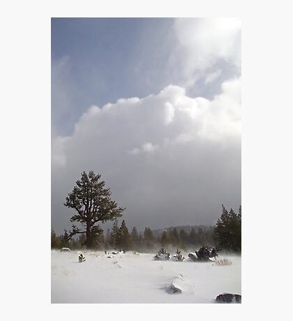 Blustery Washoe Meadows Photographic Print