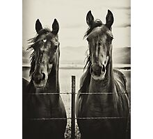 Horses - American Yearlings Photographic Print