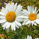 Dancing Daisies by kathrynsgallery