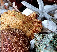 Ocean Treasures by Mylissa Artreche