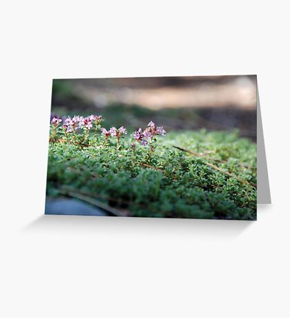 Wildflowers Emerging from Groundcover Greeting Card