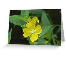 Mexican primrose-willow, Narrow-leaf Water Primrose Greeting Card