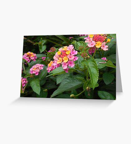 Flowery Filled Fun Greeting Card