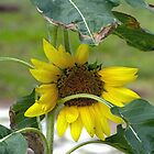 Mini Sunflower by Susan S. Kline