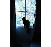Kitty in a Window Photographic Print